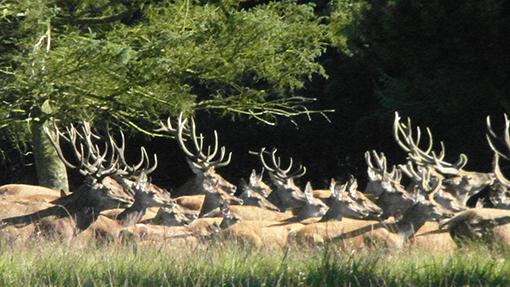 Og de var der. Flere imponerende hjorte var imellem.