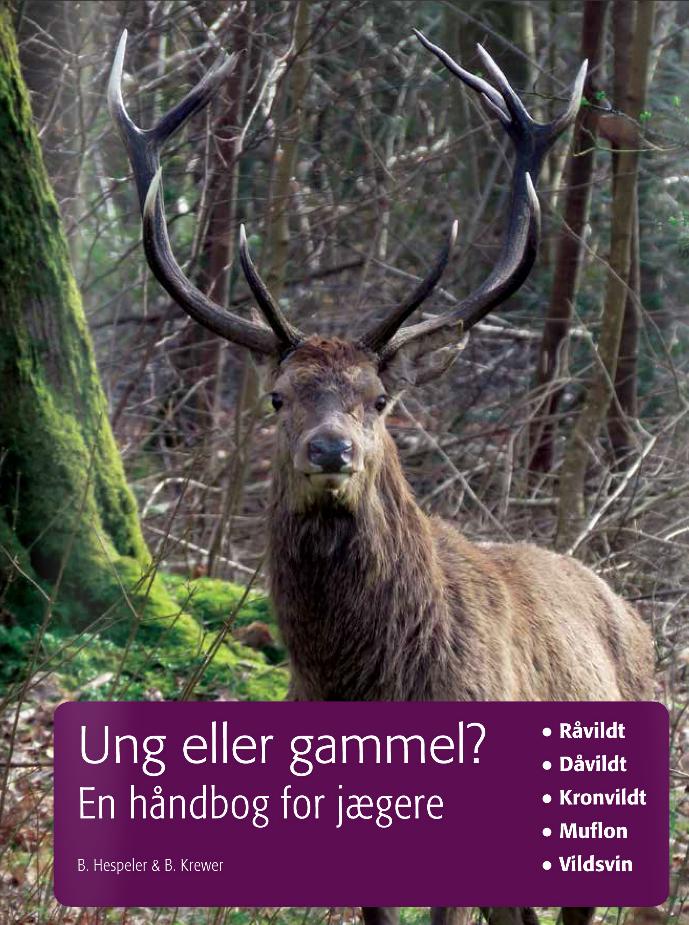 Ung-Gammel